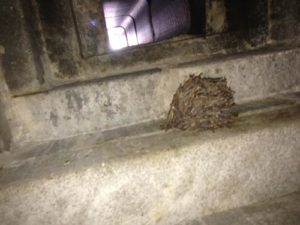 chimney-swift-nest