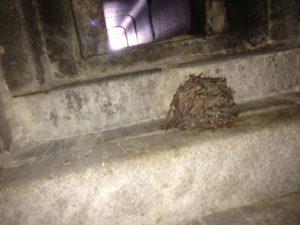 chimney-swift-nest
