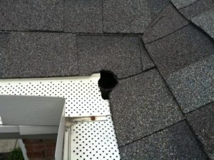 hole-chewed-above-gutter-line-by-squirrels