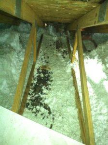 raccoon-latrine-area-2