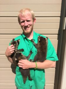 wildlife-specialist-with-baby-raccoons