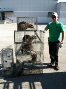 wildlife-specialist-with-raccoons