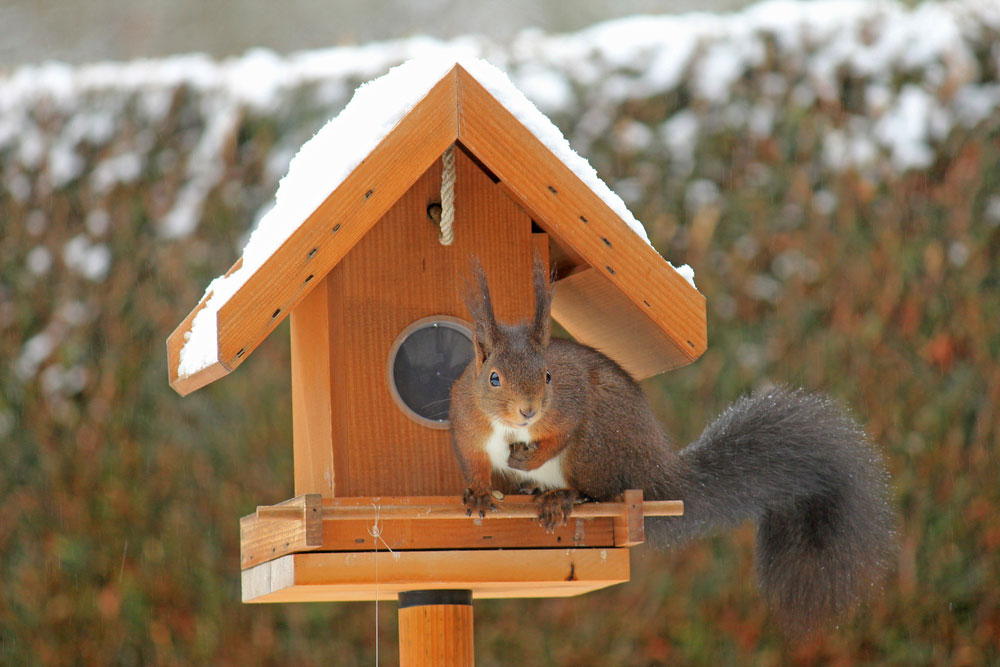 A Squirrel House to Avoid Squirrel Removal