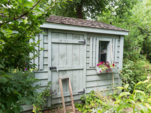 wildlife control for your backyard shed