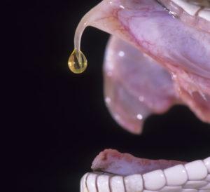 Let Animal Removal Take Care of Venomous Snakes