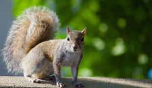 Squirrel Removal Entry