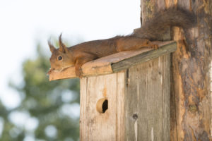 A Squirrel in the Birdhouse Might Not Merit Squirrel Removal