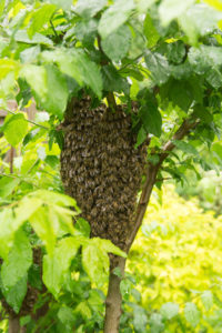Swarm capture in outdoor setting