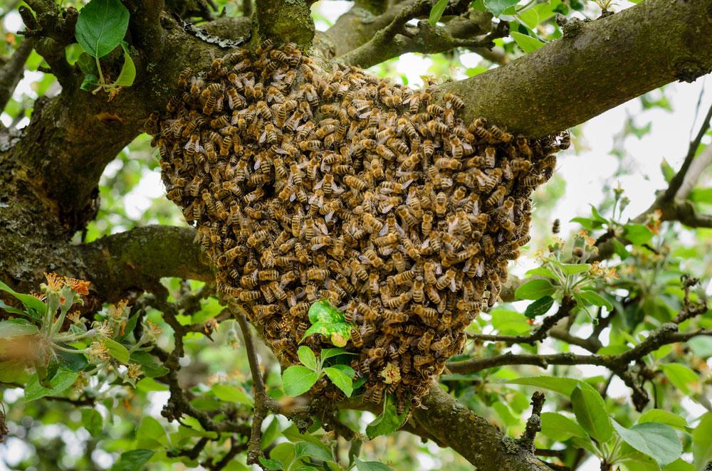 Swarm Capture Methods