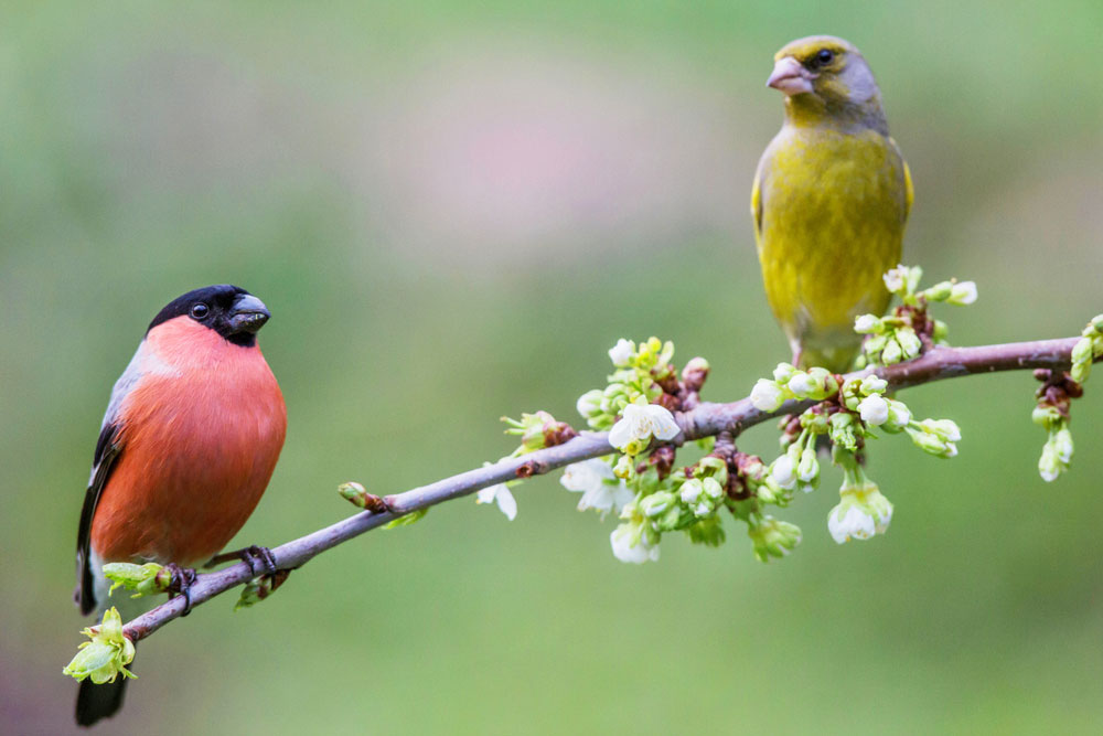 Bird Removal: Birds in Tree