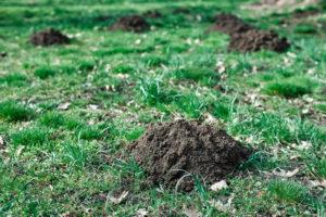 Animal Remover Yard Mole Damage Lawn Mole Removal