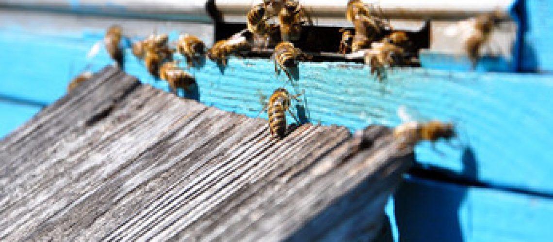 SwarmCaptureForHiveinHouse