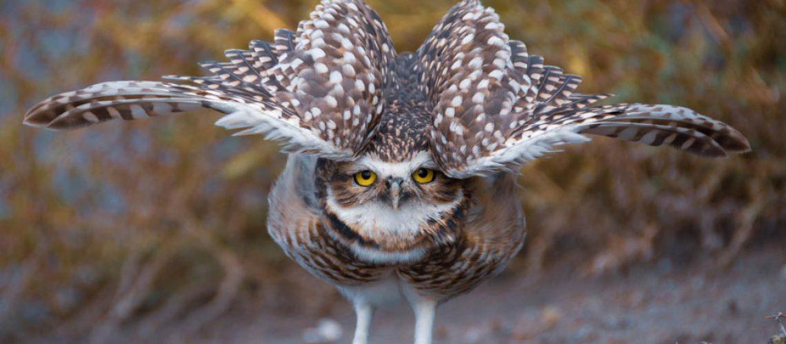 Bird Removal and Bird Behavior