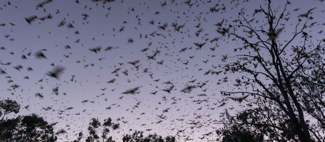 Always Utilize Humane Bat Removal