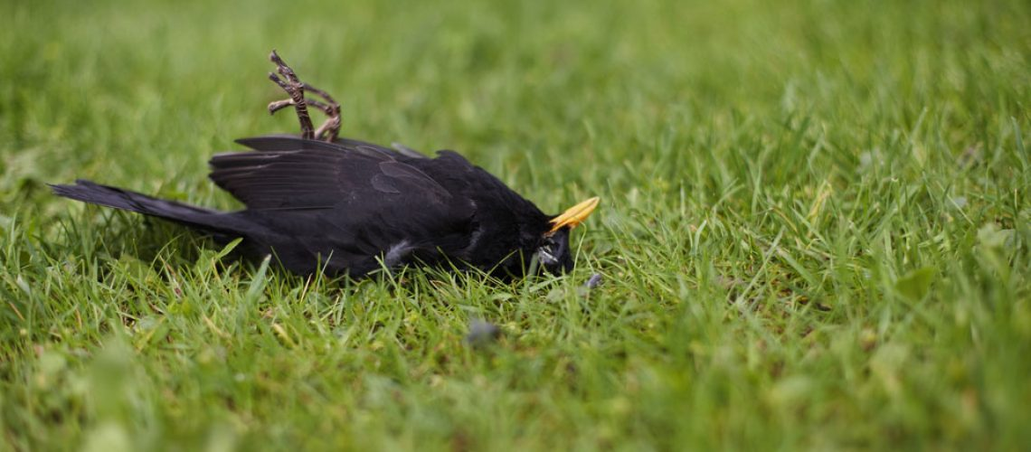 Dead animal removal tips for a dead bird in your yard