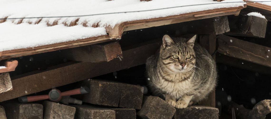 A feral cat who who needs assistance from wildlife control