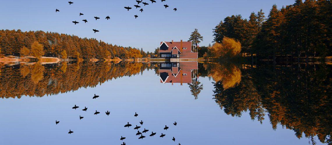 goose management at lake property