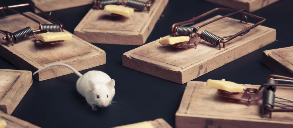 There are many types of mousetraps to use for your animal removal needs