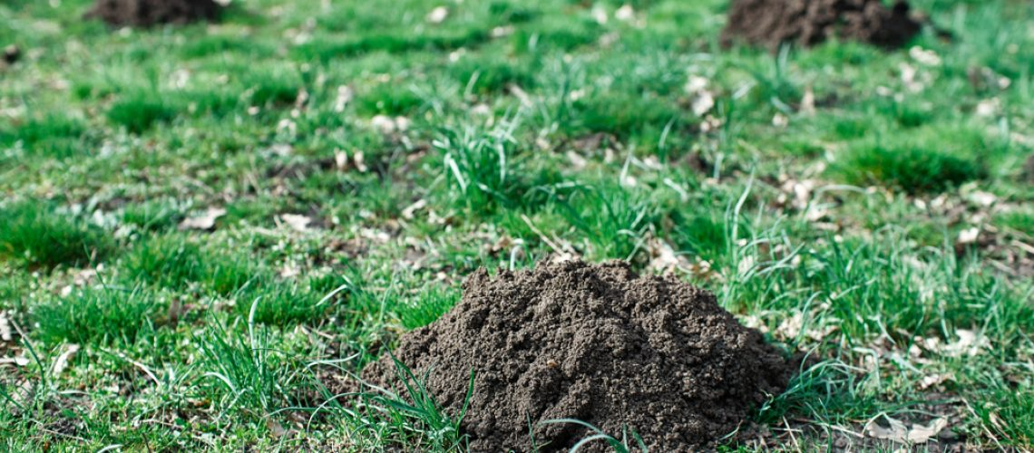 Animal Remover Yard Mole Damage Lawn Mole Removal