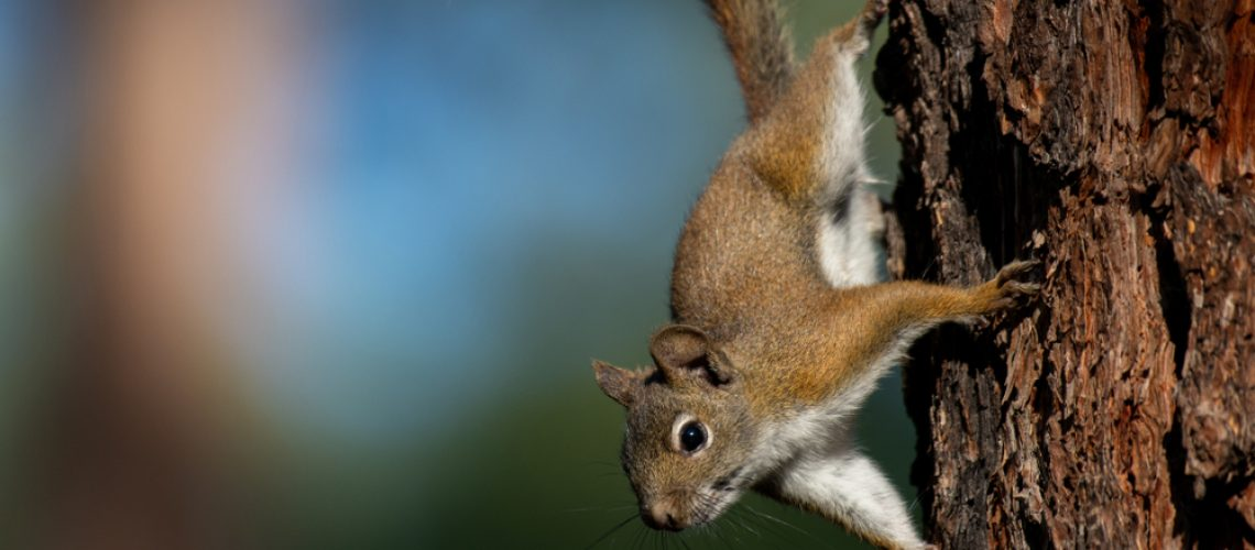Animal Remover Squirrel Removal Summer