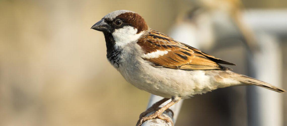 Bird removal bird in garden