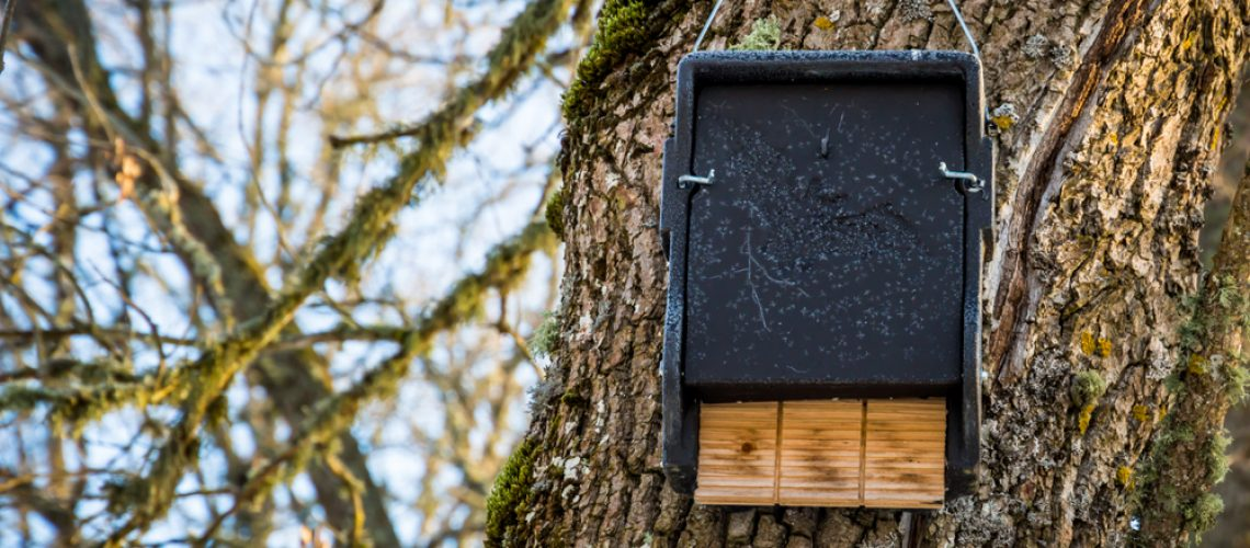 Animal Remover Bat House Bat Removal