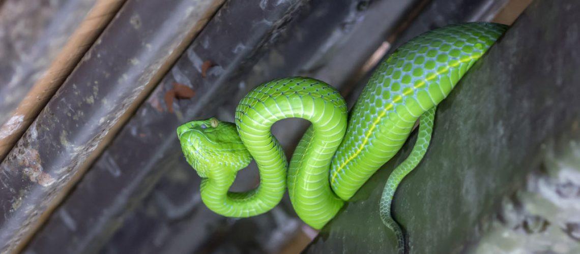 Snake inside house