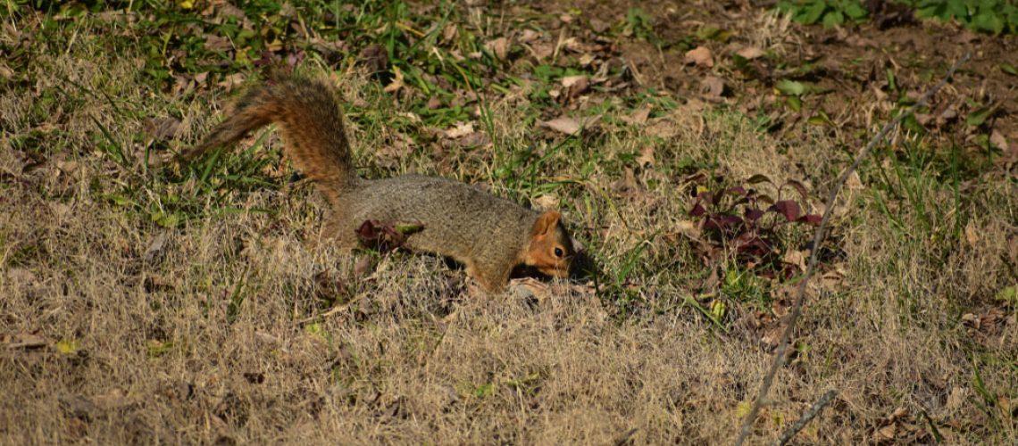 Squirrel in back yard