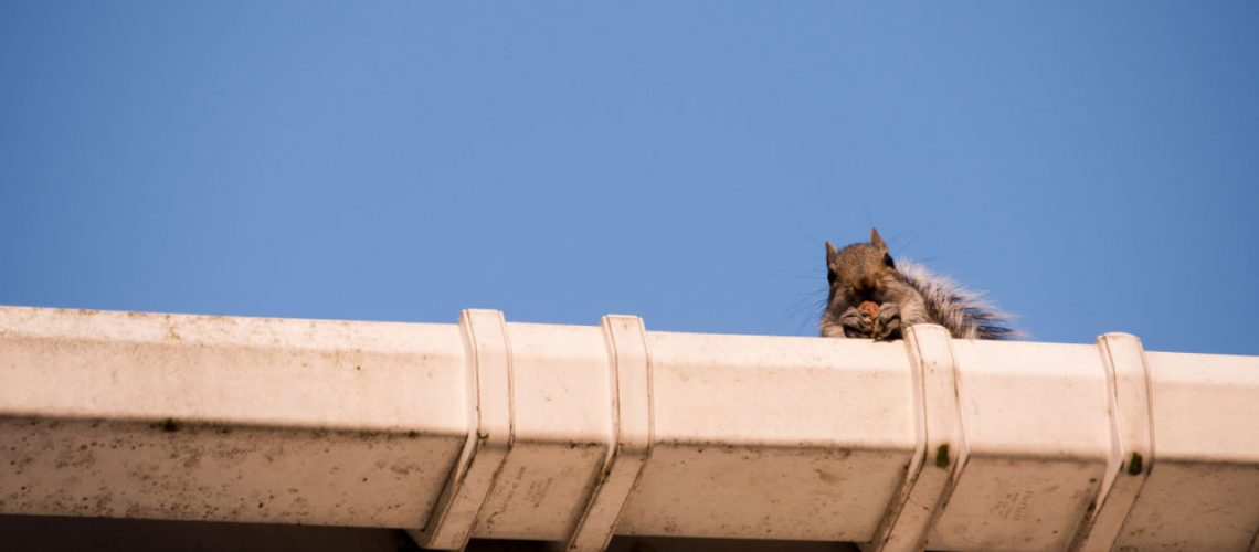 A squirrel on the roof