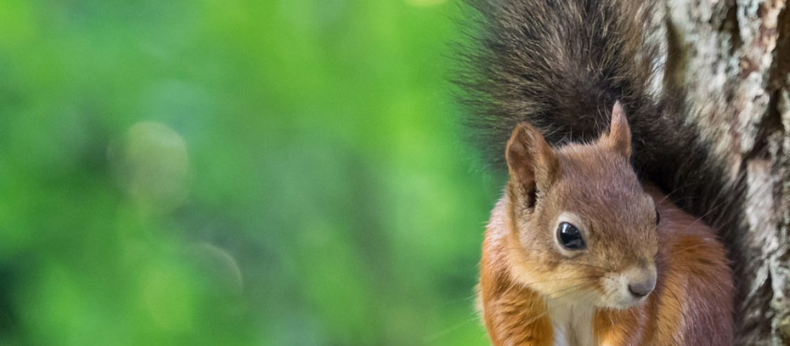 Wildlife services needed for squirrel removal